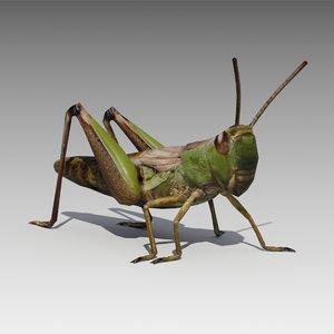 max grasshopper animations