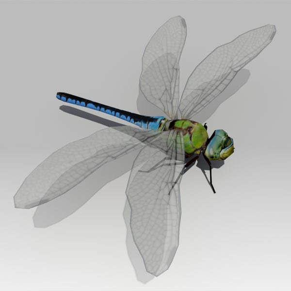 3d dragonfly animations model