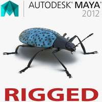 Gibbifer Californicus Beetle 2 Rigged for Maya