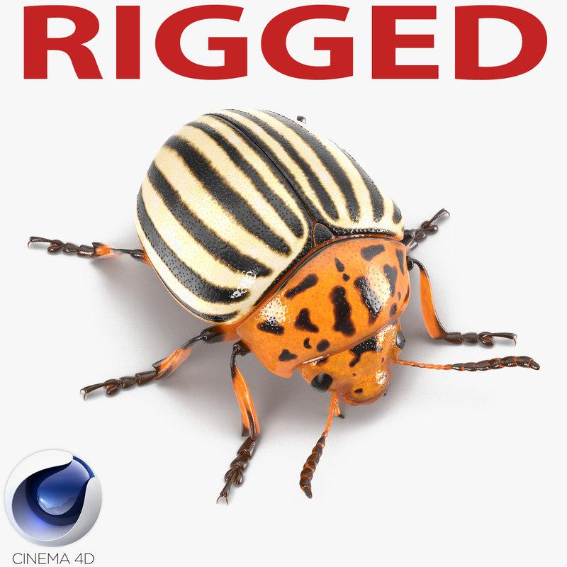 3d model colorado potato beetle rigged
