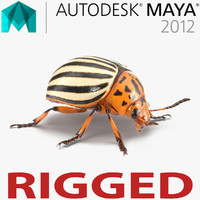 colorado potato beetle rigged ma