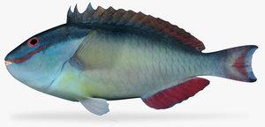 3d model redtail parrotfish