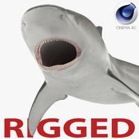Bull Shark Rigged for Cinema 4D