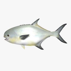 permit fish 3d model
