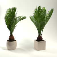 3d potted plants revoluta