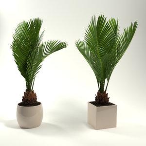 3d potted plants revoluta