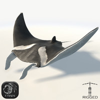 rigged manta 3d model