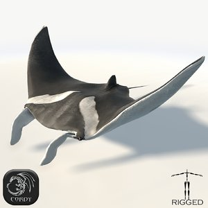 rigged manta 3d model