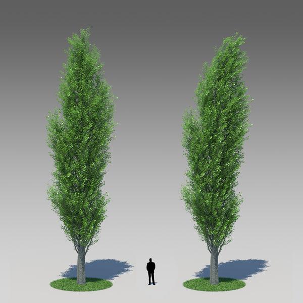 3d model populus nigra poplar tree
