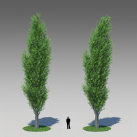 Populus Nigra 001 (+ same with wind bend)