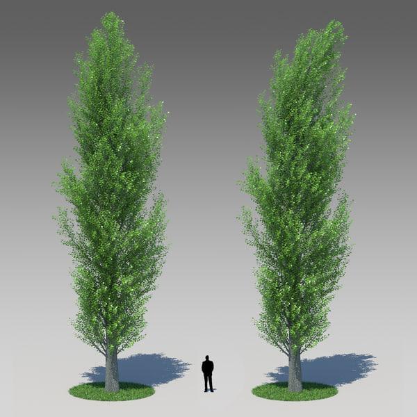3d populus nigra poplar tree model
