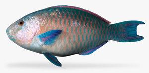 3d azure parrotfis