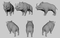 3d obj wild boar