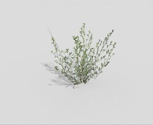 meadow grass 3d 3ds