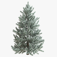 snow fir tree 3d model