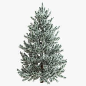 snow fir tree 3d model