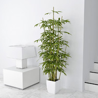 3d model of bamboo