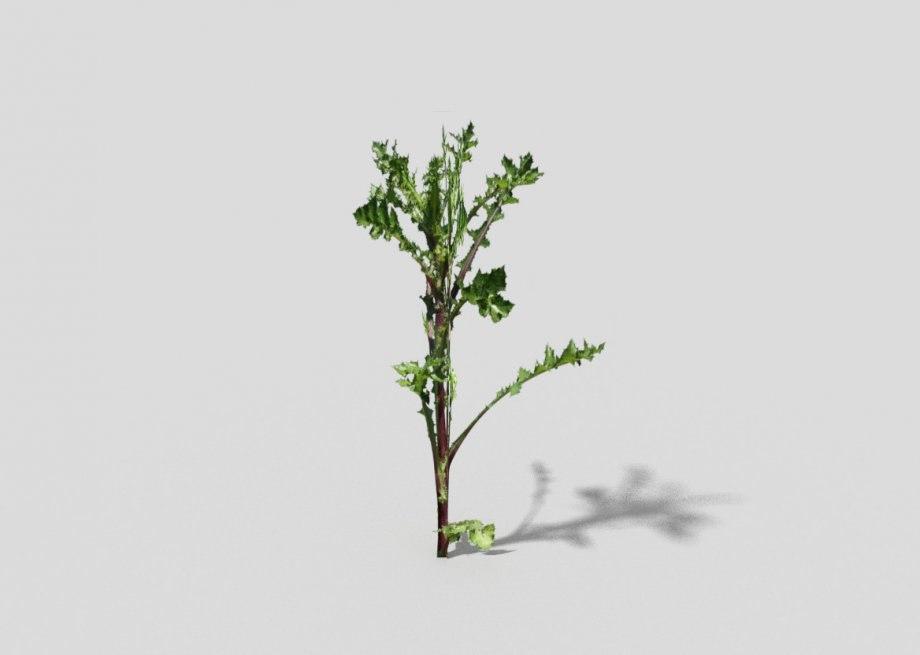 plant games 3d x