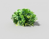 shrub games 3d model