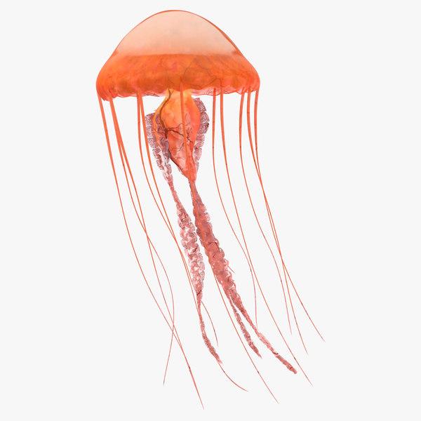 c4d jellyfish 01