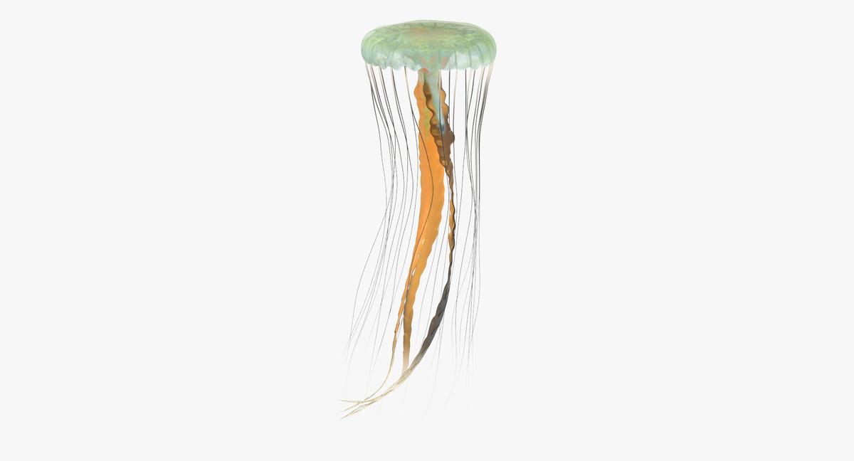 jellyfish 02 3d max