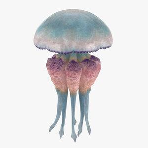 jellyfish 03 3d max