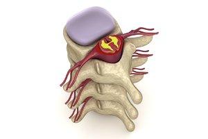 3d human spine : nerve