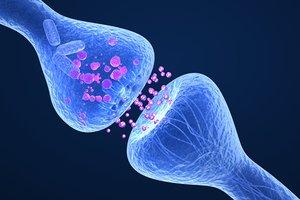 3d max active receptor human brain