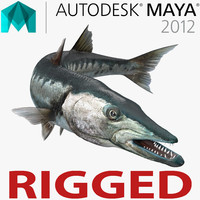 3d model barracuda fish rigged