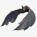 bat 3D models