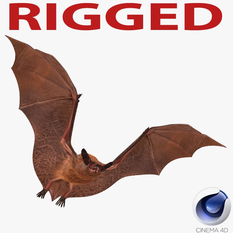 bat rigged 3d c4d