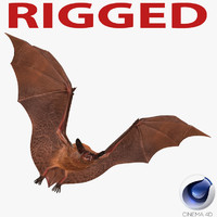 bat rigged 3d c4d