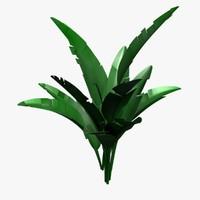 3d model bannana plant