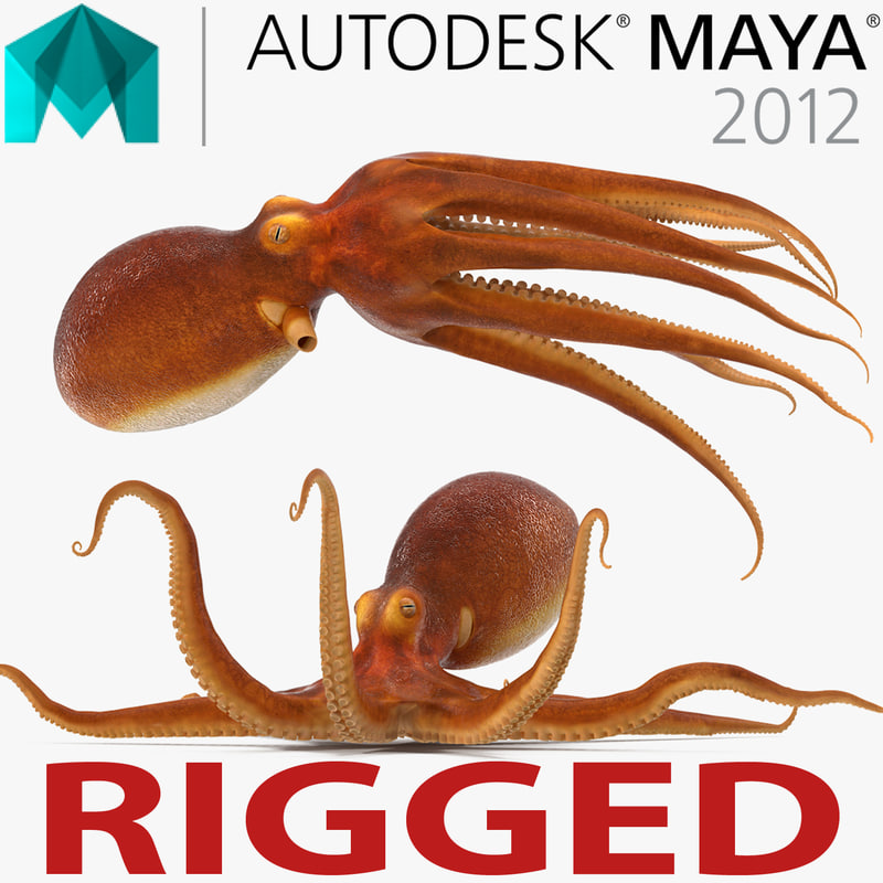 common octopus rigged 3d model