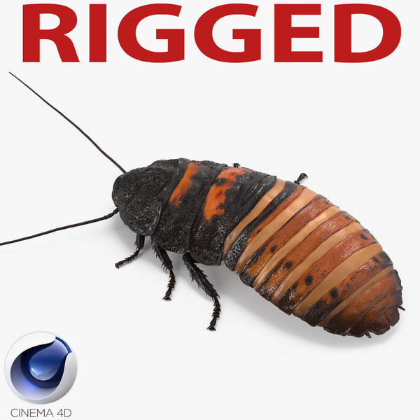 3d hissing cockroach rigged model
