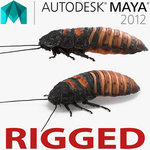 3d model hissing cockroach rigged