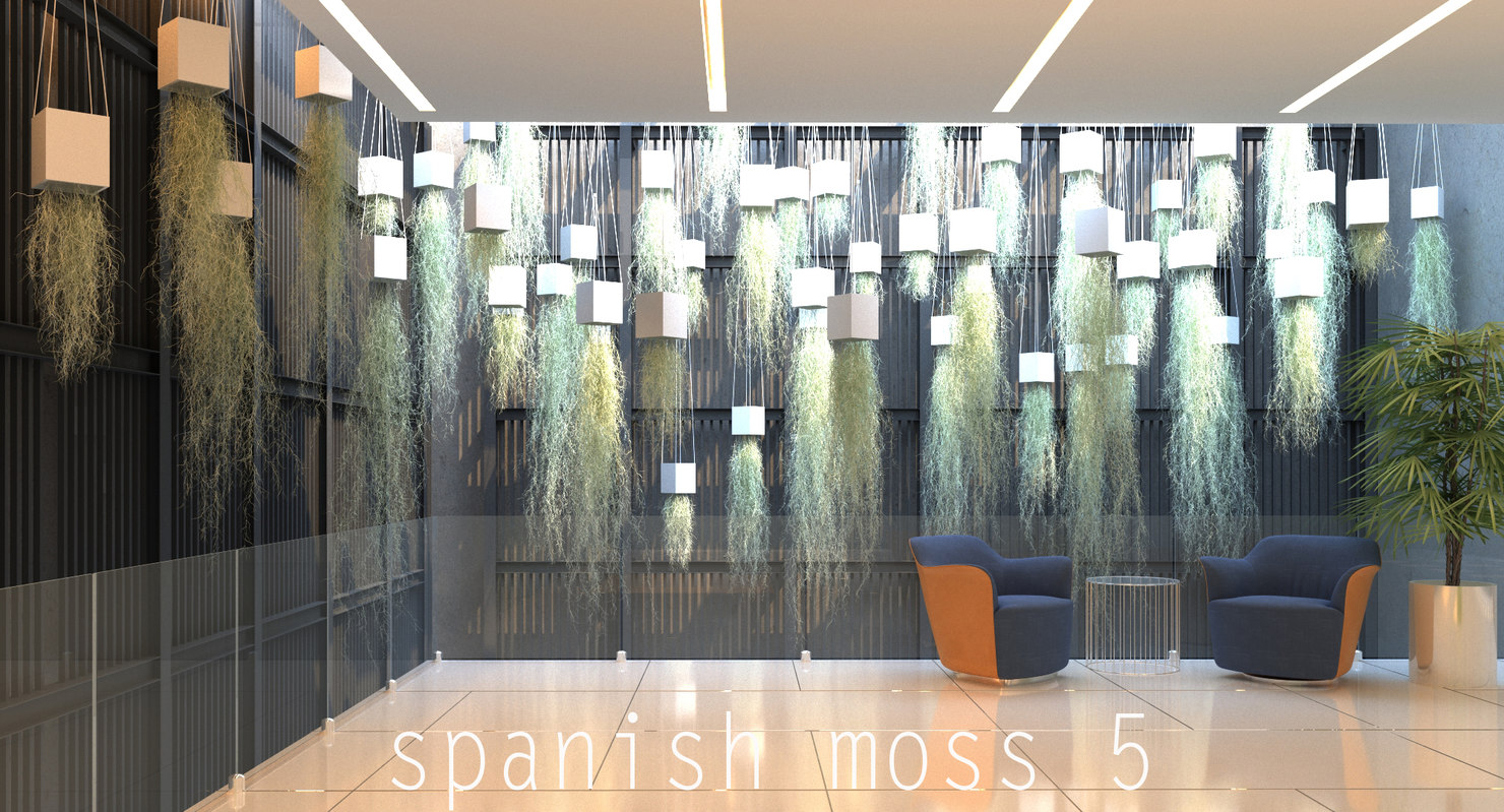 3d model spanish moss