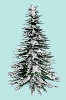 snow pine max