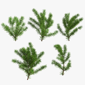 christmas fir branches max
