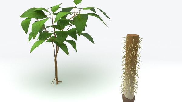 3d root tip