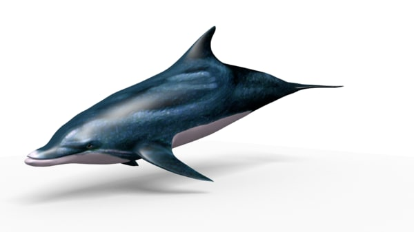 dolphin blend