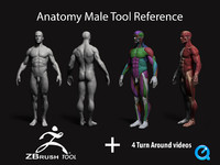 anatomy male tool reference 3d 3ds