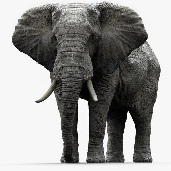 fbx elephant africa