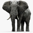 African Elephant (Rigged)