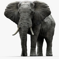 African Elephant (Animation) (Rigged)