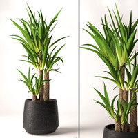 yucca plant 3d model