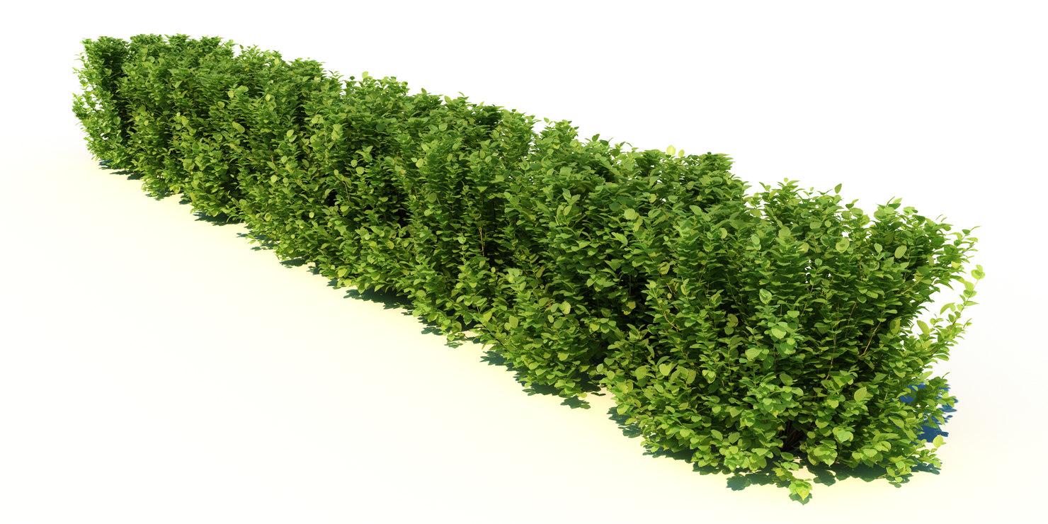 3d max hedge bushes