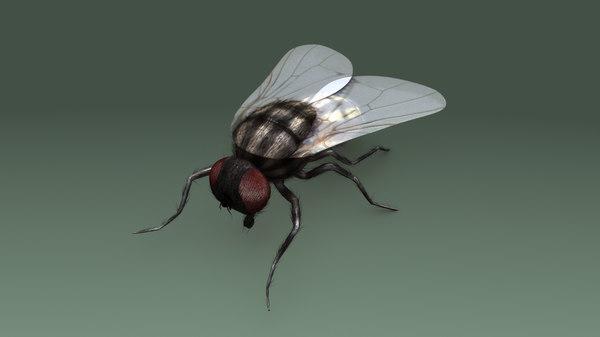 obj housefly fly