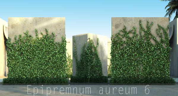 3d epipremnum aureum
