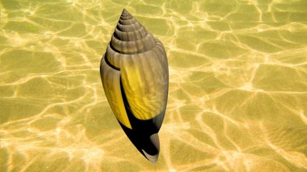 3d glory sea shell